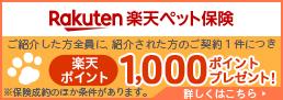 Rakuten 楽天ペット保険 ご紹介した方全員に、紹介された方のご契約1件につき 楽天ポイント1,000ポイントプレゼント!