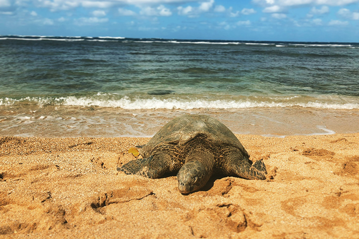 ハワイの法律とルール